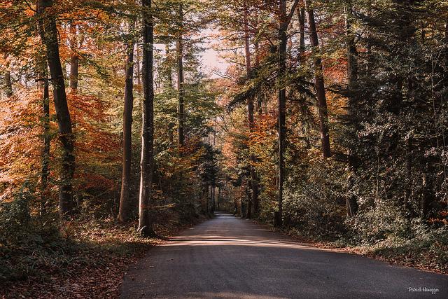 Farben im Herbstwald