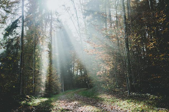Herbst + Nebel + Wald + Sonne