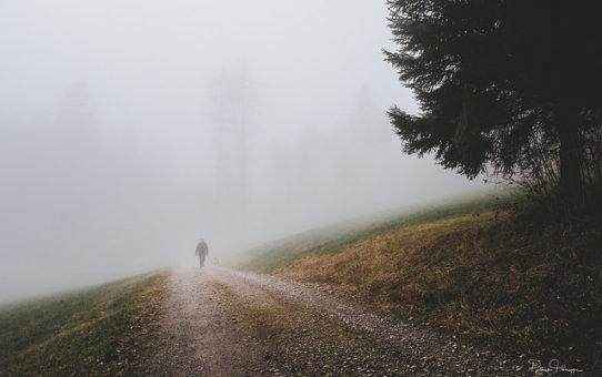 Der Reiz des Nebels